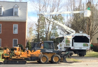 Tree Care Service in Northern Virginia | Absolute Tree