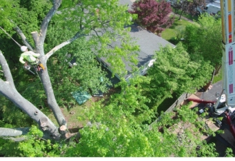 Licensed Tree Removal